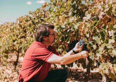 Winemaker2